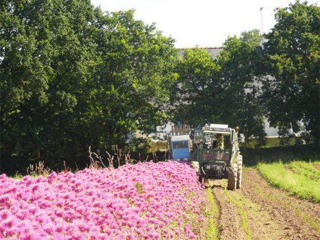 ferme avelenn 467x350 - Producteur d'Huiles Essentielles