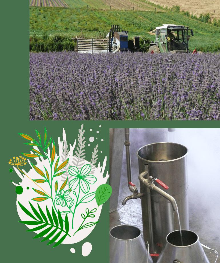 paysans distillateurs - Producteur d'Huiles Essentielles